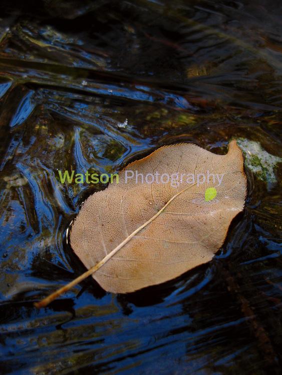 Autumn on Ice