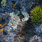 Color palet of different types of moss and lichen
