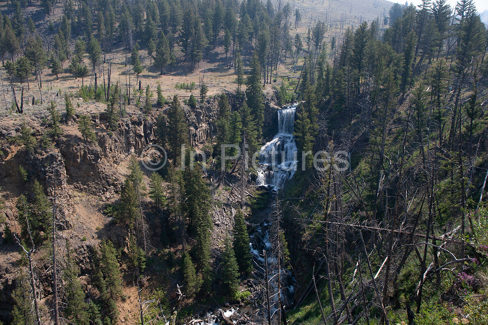 Deforestation of pine wood trees on a hillside in Yellowstone National Park, Wyoming, United States. Fires on occasion rage through the forest leaving behind burnt and fallen trees which are left to decompose naturally, and to regrow over time. This is how the park is run, leaving nature to take its natural cause, not intervening with nature.