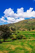 Sheep ranch on the shore of Lake Wanaka, Otago, South Island, New Zealand