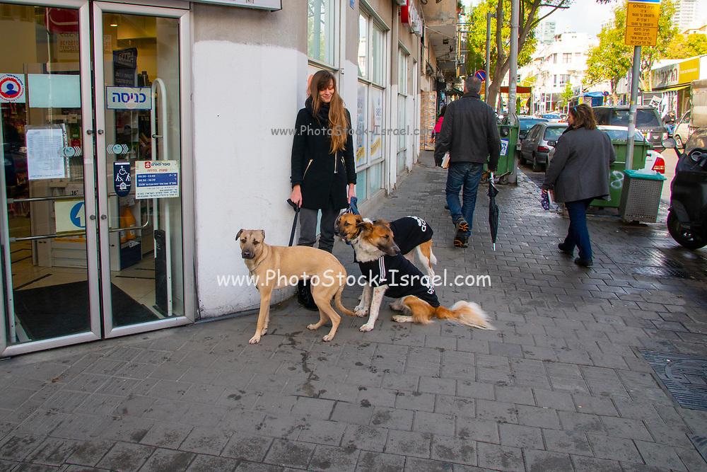 Urban Female dog walker in Florentin neighbourhood, Tel Aviv, Israel