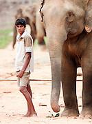 Portrait of an elephant handler at the Pinnawela Elephant Orphanage, Kegalle, Sri Lanka