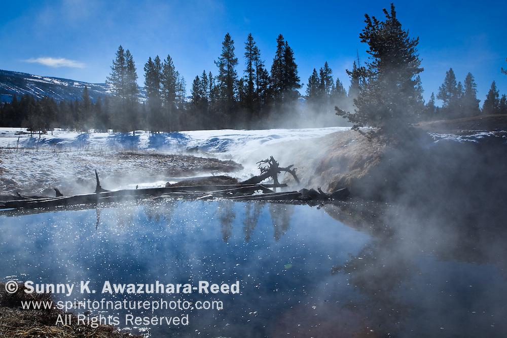 Steam from the hot springs in Polecat Creek along the Polecat Creek Loop Trail, John D. Rockefeller, Jr. Memorial Parkway, WY.  Winter Scene.