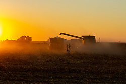 Corn or Maize is harvested by a combine and placed into a grain wagon pulled by a tractor as the sunsets east of Bloomington IL