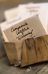 Storing seeds in envelopes at Glebe Cottage