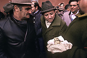 Three Truffle hunters study and discuss the value and price of the large truffle one holds in his hands, in Alba market, italy.