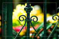 Las Vegas & Botanical Gardens ... exquisite, beautiful, peaceful, colorful, elegant ... and full of magical images. <br /> <br /> Craig W. Cutler Photography.<br /> DesignLIFE by Craig W. Cutler Photography.