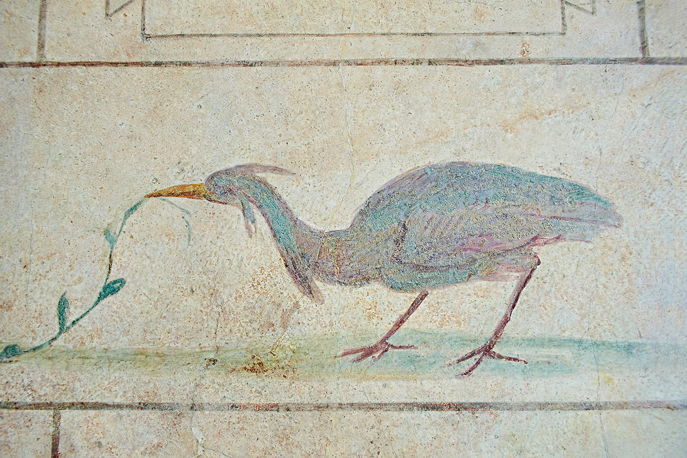 Roman Fresco of an exotic bird from  The Large Columbarium in Villa Doria Panphilj, Rome. A columbarium is usually a type of tomb with walls lined by niches that hold urns containing the ashes of the dead.  Large columbaria were built in Rome between the end of the Republican Era and the Flavio Principality (second half of the first century AD).  Museo Nazionale Romano ( National Roman Museum), Rome, Italy. .<br /> <br /> If you prefer to buy from our ALAMY PHOTO LIBRARY  Collection visit : https://www.alamy.com/portfolio/paul-williams-funkystock/national-roman-museum-rome-fresco.html<br /> <br /> Visit our ROMAN ART & HISTORIC SITES PHOTO COLLECTIONS for more photos to download or buy as wall art prints https://funkystock.photoshelter.com/gallery-collection/The-Romans-Art-Artefacts-Antiquities-Historic-Sites-Pictures-Images/C0000r2uLJJo9_s0