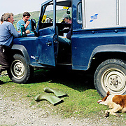 A group of hill farmers take a break by a landrover after gathering their moorland sheep on foot, Upper Nidderdale, North Yorkshire, UK