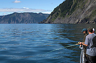 Fishing with Crackerjack Charters in Resurrection Bay on the southeastern tip of the Kenai Peninsula. <br /> <br /> Seward, Alaska, USA<br /> <br /> Photographer: Christina Sjögren<br /> <br /> Copyright 2019, All Rights Reserved