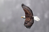 Tours: Bald Eagles of Alaska