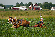 Route 20 project. Old Order Mennonite farmer, Indiana Countryside