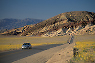 Asphalt road and tourist car driving through field of wildflowers blooming in spring, Death Valley, California