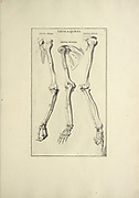 woodcut print of Human Anatomy skeleton Arms from Anatomia per uso et intelligenza del disegno printed in Rome in 1691