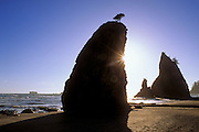 Silhouetted sea stacks and sunflair on Rialto Beach, Olympic National Park, Washington