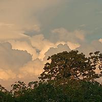 Thunderheads billow over the Amazon Jungle in Peru.