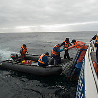 Tourist ride zodiac rafts back to Chilean cruise ship Mare Australis after landing at Cape Horn.