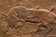 Assyrian bas relief panel,  in limestone from a frieze showing the King's lion hunt. from the  Palace of Nineveh, circa 645-635 BC