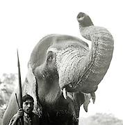 Elephant and Handler,The Riverside Elephant Park Near Kandy, Sri Lanka