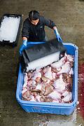Commercial skate fishing haul, Chatham Cape Cod, Massachusetts, USA.