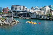 Wellington Waterfront, people kayaking in the harbour. Wellington, New Zealand