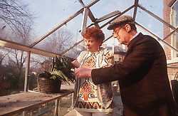 Elderly couple standing in greenhouse pruning plant,