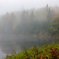 I traveled way up north to New Hampshire to Errol and Milan exploring 13-Mile Woods along the Androscoggin River. Early in the morning fog dominated the scenery and it was a pleasure to share nature with the rare wildlife I encountered. <br />