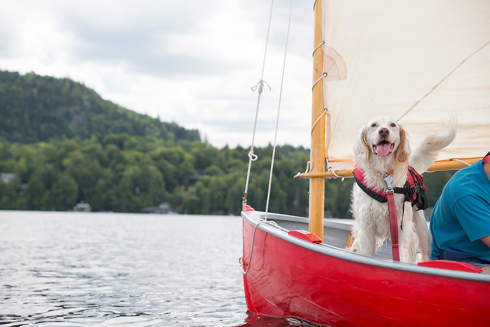 English setter out for a sail with his owner
