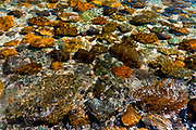 SUBJECT: Rocky Shore IMAGE: Sunlight dances in shallow water on corourful stones, from many origins (mostly granire) while the tide washes to and fro.  Wavelets lens the light creating abstract patterns.