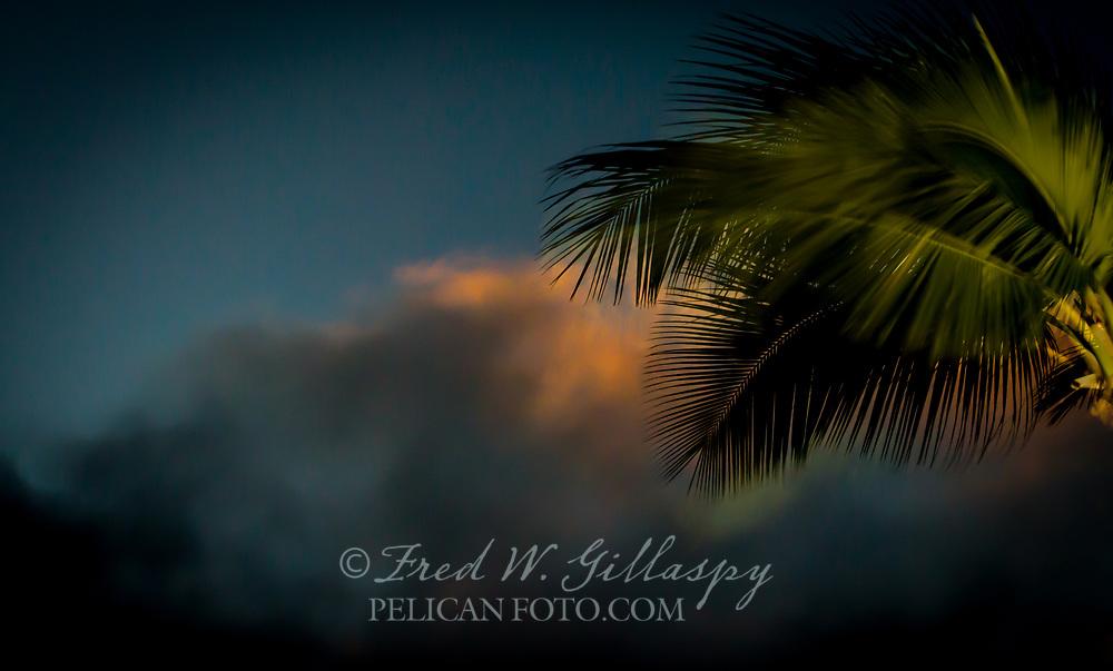 Wind, Sky, Palm