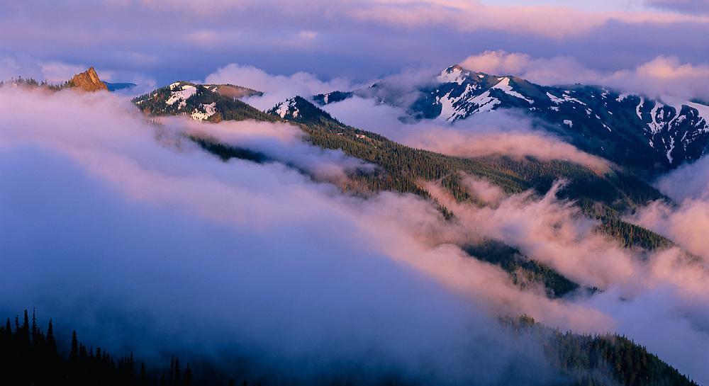 View toward Steeple Rock from Hurricane Ridge, summer, evening light, Olympic National Park, Washington, USA