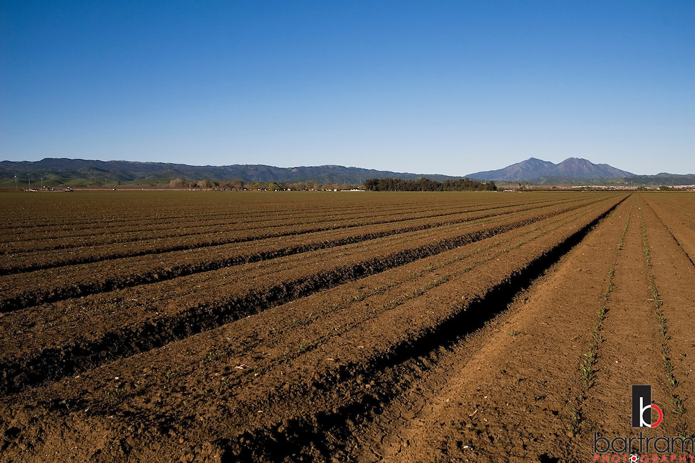 Farm land is shown in Brentwood, California on Monday, March 17, 2008. (Photo by Kevin Bartram)