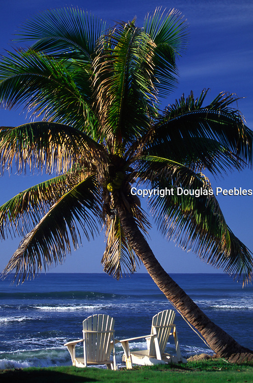Beach chairs with palm tree<br />