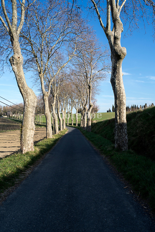 countryside road lined with trees with rural agricultural landscape in the Razes region of the Languedoc France during early spring