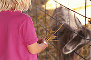 A young blonde child feeding a goat hay