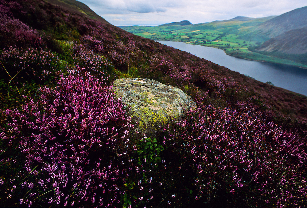 Flowers and ferns along the landscape of Northern England.