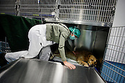 A group of veterinarians teamed up and created an innovative project in Portugal. Set in Cascais, Reference Veterinary Clinic has exclusive resources in the country.<br /> Pedro Parreira, responsible for the neurosurgery unit, says there has always been the need to create a multidisciplinary unit with veterinary reference, which could help in addressing the most serious and complex cases.<br /> The result of this is reflected in veterinary medicine with high demand. The clinic receives exotic animals, as well dogs and cats. The unit provides various medical specialties such as neurosurgery, ophthalmology, cardiothoracic surgery, orthopedics, and a unit dedicated to physical therapy will open soon.