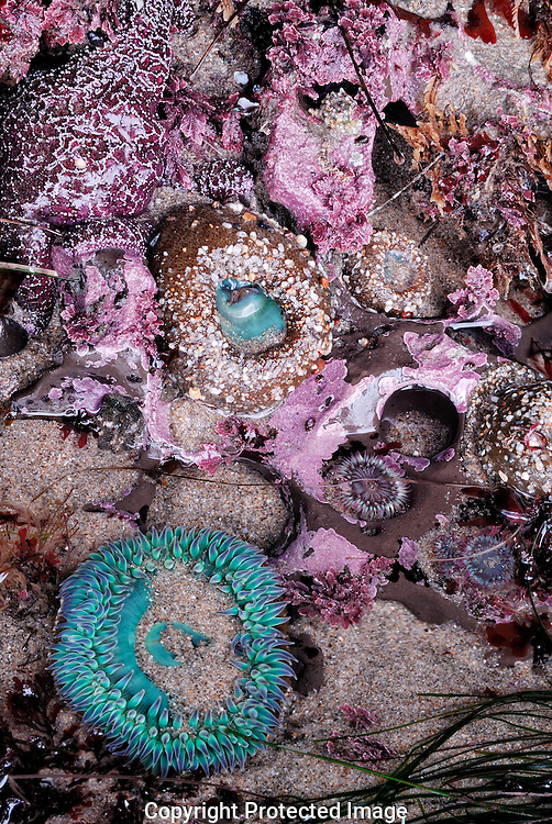 Jewels of the tide pool