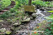 65021-028.14 Shade garden with stream and waterfall on hillside, hostas, ferns, lantana,  St. Louis  MO