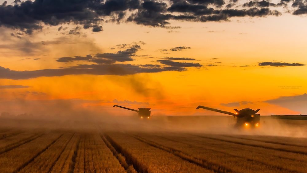 Combines working at twilight during the wheat harvest, Shields & Sons Farming, Goodland, Kansas USA.