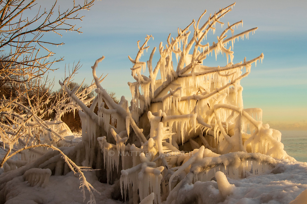 Ice Formation on Tree Along Lake Michigan Coast.  Milwaukee, WI. February 2018