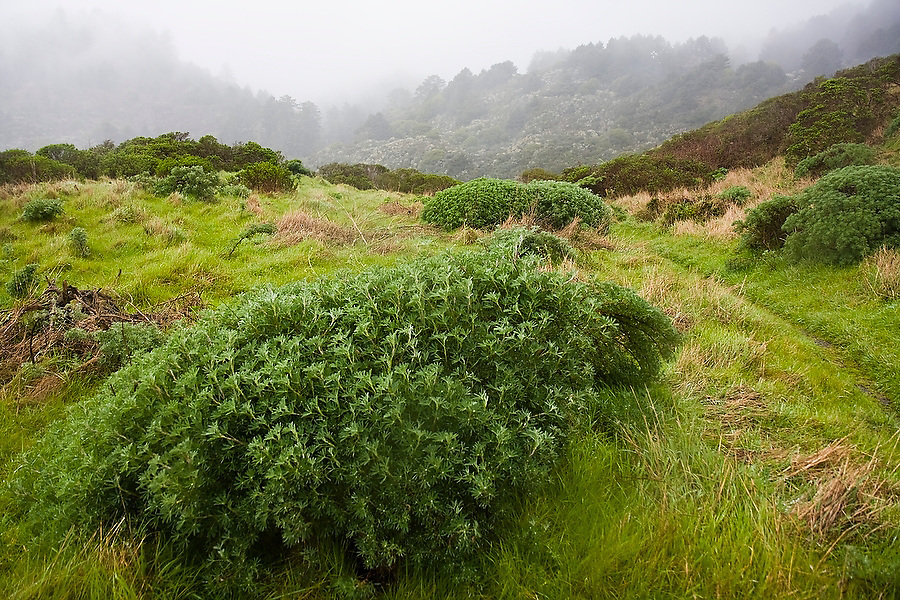 An overcast and foggy morning view along the Coast Trail, which follows the top of the bluffs at the south end of Point Reyes National Seashore, California.