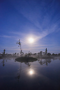 Light night with full-moon, few stars and deep blue sky over raised bog and its bog-pools with slowly rising fog between small scots pines (Pinus sylvestris) and tiny islands, Kemeri National Park (Ķemeru Nacionālais parks), Latvia Ⓒ Davis Ulands | davisulands.com