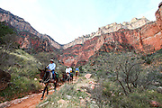 riders on mules Grand Canyon National Park, Arizona, USA