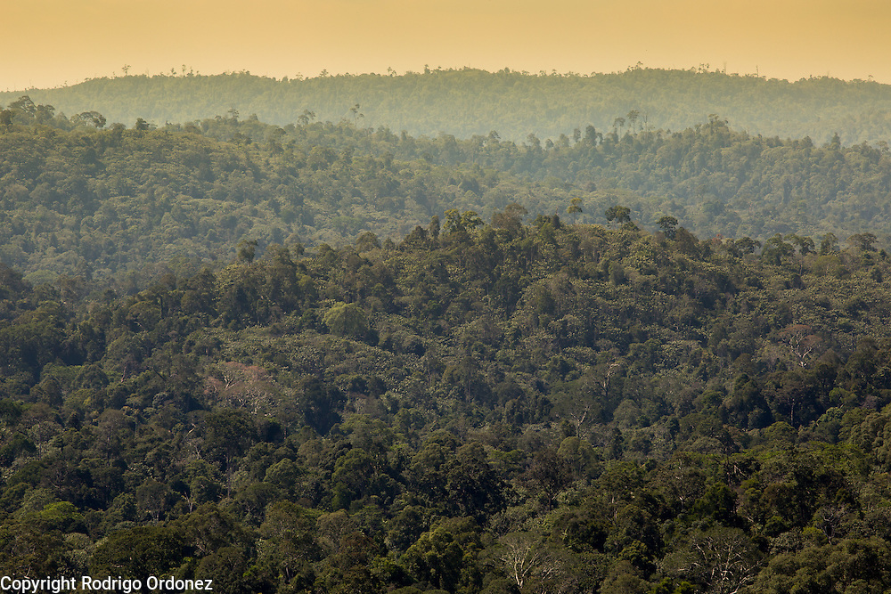 Panoramic view of forests and tree canopies at the Arsari Lestari conservation area in Penajam Paser Utara district, East Kalimantan, Indonesia, on March 12, 2016. <br /> (Photo: Rodrigo Ordonez)