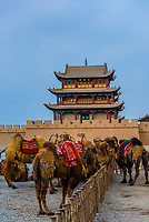 Bactrian camels. Jiayuguan Fort is the western end of the Great Wall built in the Ming Dynasty (1368 – 1644). It was an important military fortress and  key waypoint of the ancient Silk Road. This was the last major stronghold of Imperial China. Gansu Province, China.