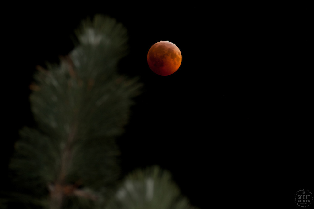 """""""Total Lunar Eclipse on Winter Solstice 2"""" This very special total lunar eclipse was photographed on 12-20-2010 in the Tahoe Donner area of Truckee, CA."""