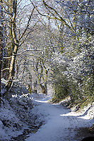 snow covered country path through woodland