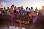 pig is removed from underground <br /> oven in luau staged for tourists,<br /> Lahaina, Maui, Hawaii, USA ( Pacific )
