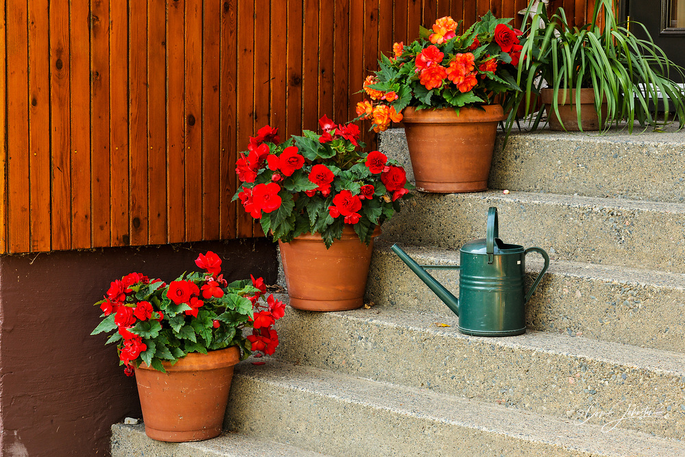 Staircase with potted begonias and watering can, Greater Sudbury, Ontario, Canada